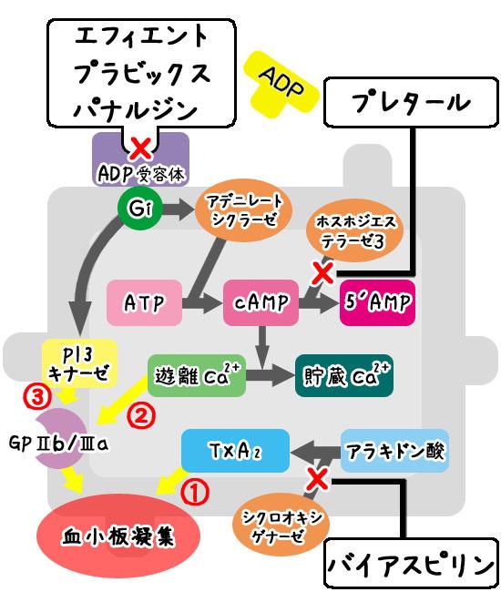 抗血小板薬の機序