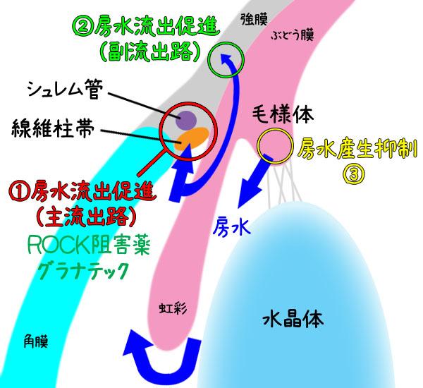緑内障治療薬の作用機序
